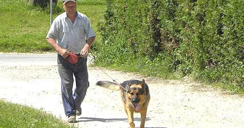 Braver Hund verjagt gemeine Autodiebe (Bild: Ernst Vitzthum)