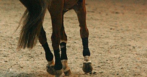 Pferde laufen über die B147 - Unfall mit zwei Verletzten (Bild: APA/Herbert Pfarrhofer)