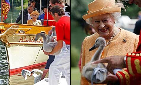 Queen nimmt erstmals an Schwanenzählung teil