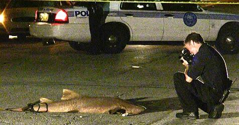 Händler in Miami entsorgen Hai auf der Straße