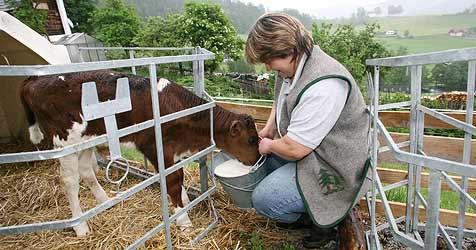 Milchbauern beschließen Streik auf Rieder Messer (Bild: Jürgen Radspieler)