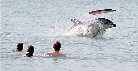 Verspielter Delfin ärgert Badegäste in Neuseeland