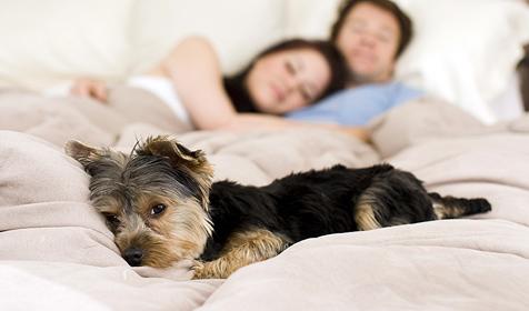 Dürfen Hund oder Katze im Bett schlafen? (Bild: © [2009] JupiterImages Corporation)