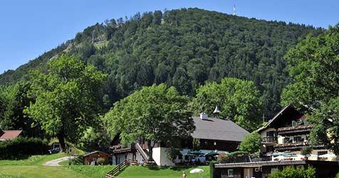 Am Gaisberg fallen sieben Hektar Wald (Bild: Wolfgang Weber)