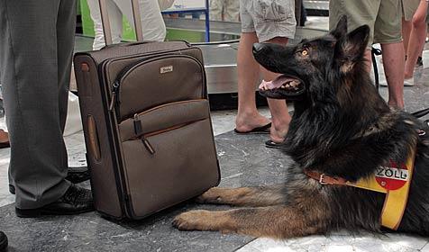 Erfolgsbilanz des Zolls am Flughafen Schwechat (Bild: APA/Georg Hochmuth)