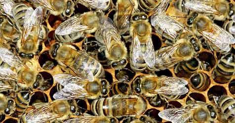 Dramatischer Anstieg an Insektenstich-Einsätzen (Bild: dpa/dpaweb/dpa/Z5302 Andreas Lander)