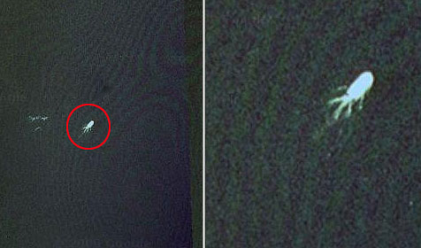 """Nessie"" angeblich per Google Earth gesichtet (Bild: Google Earth)"