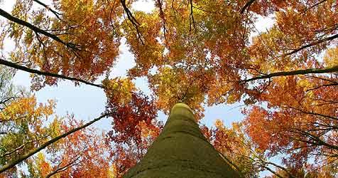 Herbstbeginn mit Sommertemperaturen (Bild: dpa/dpa-Zentralbild/Z1022 Patrick Pleul)