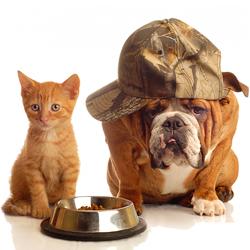 Die 10 häufigsten Ernährungsfehler bei Tieren (Bild: © [2009] JupiterImages Corporation)