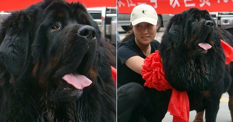 So sieht ein 400.000 Euro teurer Hund aus