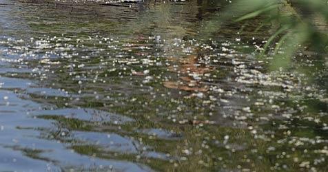 Neuer Anlauf für Umweltprojekt an der Donau (Bild: APA/BARBARA GINDL)