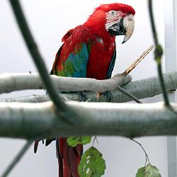 Riesen-Papagei aus engem Käfig gerettet (Bild: Markus Tschepp)