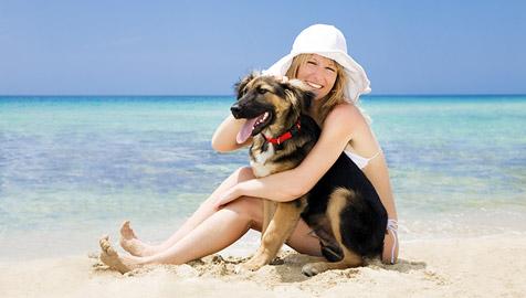 """Verreisen mit Hund und Katz"""" (Bild: © [2009] JupiterImages Corporation)"""