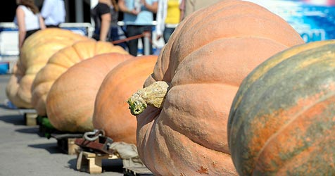 Steirischer Kürbis bringt 447,5 Kilo auf die Waage - Rekord (Bild: APA/dpa/A3587 Ronald Wittek)