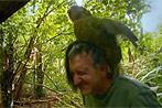 Seltener Papagei hält BBC-Reporter für Weibchen
