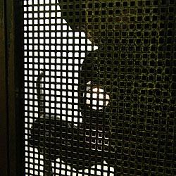 Einbrecher sucht Wohnung und Hallenbad heim (Bild: Klemens Groh)