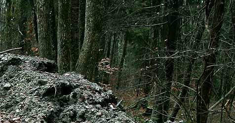 Umstürzender Baum verletzt 43-Jährigen am Kopf (Bild: APA/ Rubra)