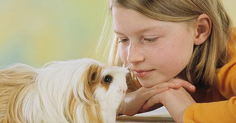Was Eltern über Meerschweinchen wissen sollten (Bild: WZF/Schanz)