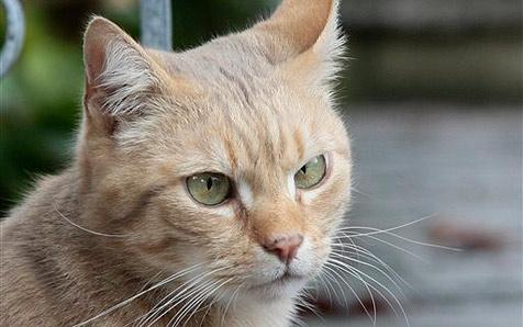 Tierhasser nimmt Katze mit Gewehr ins Visier