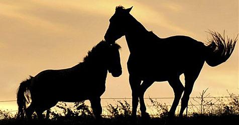 25.000 Pferde bringen 200 Millionen Euro