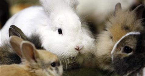 Linzer hält mehr als 20 Hasen in einer 2-Zimmer-Wohnung