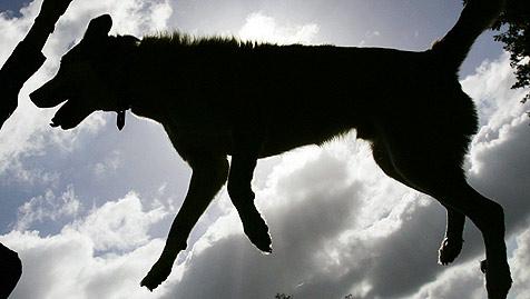 Jetzt auch drei Hunde in Enns vergiftet (Bild: dpa/A3472 Frank May)