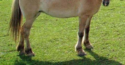 Tierquäler verletzt Pony auf Koppel in Hargelsberg (Bild: Dr. Franz-Joseph Plank)
