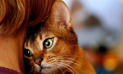 US-Wissenschaftler simulieren das Gehirn einer Katze