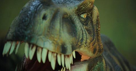 Tyrannosaurus rex & Co stürmen am Wochenende Wels (Bild: © EMS Exhibits)