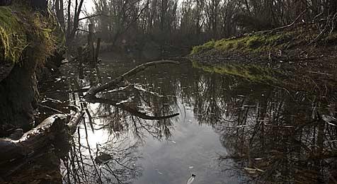Nationalpark in Hainburg: Vorerst keine Rodung (Bild: APA-FOTO: HERBERT NEUBAUER)