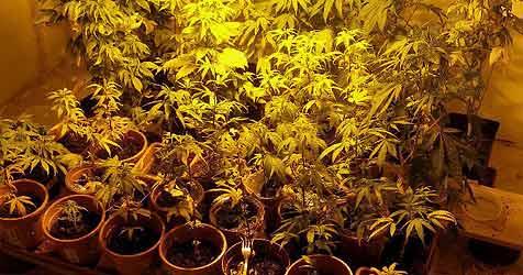 Haus für Drogenplantage angemietet (Bild: Polizei)