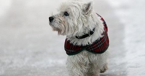 Hunde-Bekleidung schon längst nicht mehr nur für Möpse (Bild: Kay Nietfeld dpa/lno)