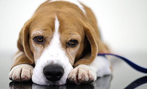 """""""Konsument"""": Saftige Prämien bei Tierversicherungen"""