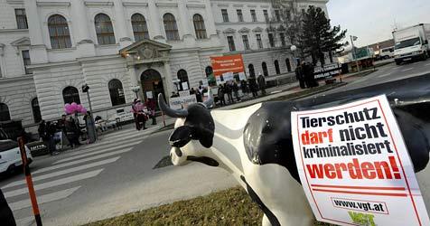Urteilsverkündung ist für den 2. Mai vorgesehen (Bild: APA/HERBERT PFARRHOFER)
