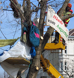 Baumbesetzer vom Areal entfernt - Rodung fortgesetzt (Bild: APA/THOMAS RIEDER)
