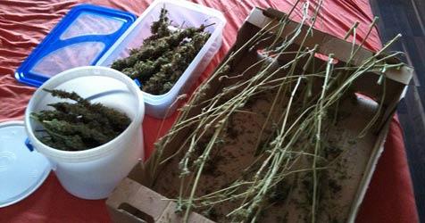 Drogen im Wert von 2.000 Euro bei 24-Jährigem entdeckt (Bild: Sicherheitsdirektion NÖ)
