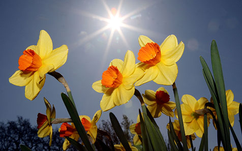 Ist das noch Frühling oder schon Sommer? (Bild: dpa/Malte Christians)