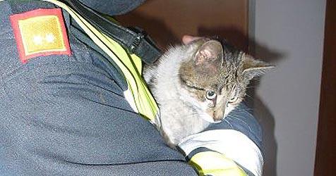 Mieze aus Feuer gerettet ++ Katze erschossen (Bild: FF Ottnang)