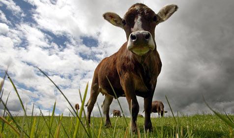 Bauern pfeifen auf Strafen wegen Impf-Verweigerung (Bild: dpa/A3542 Karl-Josef Hildenbrand)