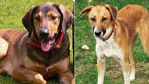 """""""Dognapper"""" fordert 1.000 Euro  Lösegeld für entführte Hunde (Bild: Poskocil)"""