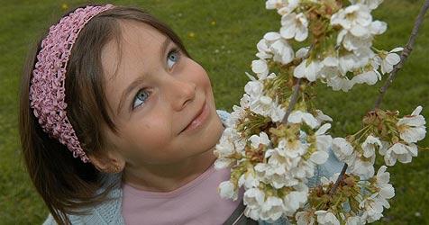 Spaß bei der Kirschblüten-Wanderung (Bild: Krone/Moser, Gabriele)