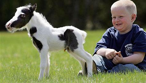 """Mini-Pferd wiegt bei Geburt 2,7 kg und ist nur 35 cm """"groß"""""""