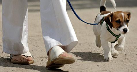 Mann im Streit um Leinenpflicht für Hunde verprügelt (Bild: dpa/dpaweb/dpa/A3576 Maurizio Gambarini)