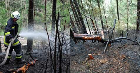 Funkenflug löst Waldbrand in Breitenstein aus (Bild: Einsatzdoku.at)