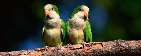 Singvögel können riechen (Bild: © 2010 Photos.com, a division of Getty Images)