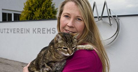 Blinde Katze wird nach 16 Jahren einfach verstoßen (Bild: Günther Kargl)