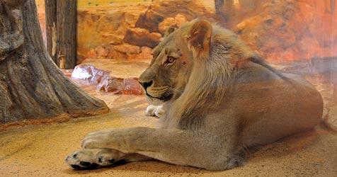 Zoo Hellbrunn feiert 2011 seinen bereits 50. Geburtstag (Bild: Wolfgang Weber)