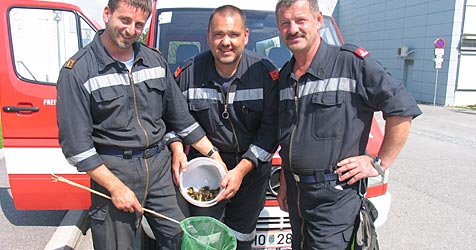 Feuerwehr befreit Entenküken aus Kanalschacht (Bild: Feuerwehr Horn)