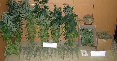Cannabis-Indoor-Plantage im Bezirk St. Pölten entdeckt (Bild: SID Niederösterreich)