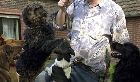 Elf Nachbar-Hunde treiben Familie in den Wahnsinn (Bild: dpa/Bernd Thissen)